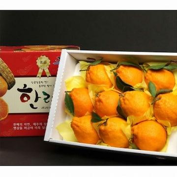 제주연가 현가원 서귀포 한라봉 6~8개(과) 2kg(1개)