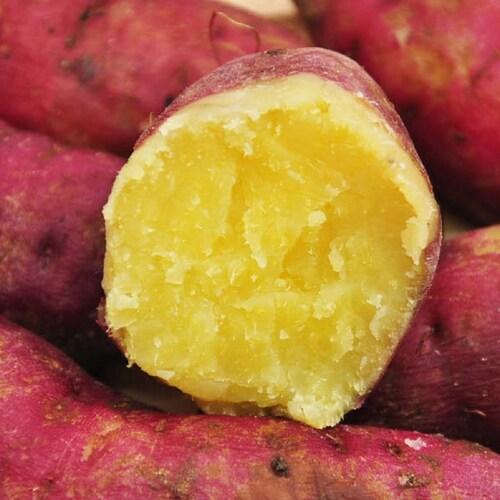 조이야드 해남 유종식님의 꿀고구마 중/한입 3kg (1개)_이미지