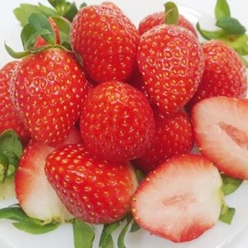 연화농원 딸기 설향 1.5kg(1개)