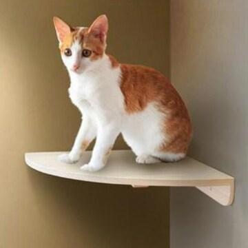 유림디앤씨 유림편백 고양이 계단 캣타워 선반 코너형