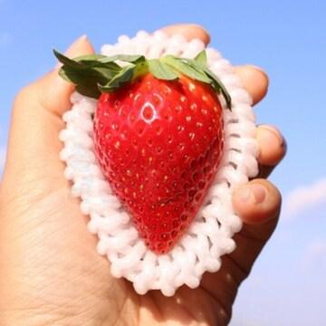 청년감별사 아리향 딸기 9개(과)(2개)