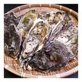 내포장터  천북양식 구이용 석굴 10kg (1개)_이미지