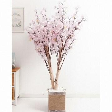 플라워트리 쌍대벚꽃나무화분set 230cm