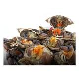 해달식품 간장게장 4개(마리) 1.7kg  (1개)