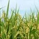 남외양곡영농조합법인 서리태 5kg (1개)_이미지