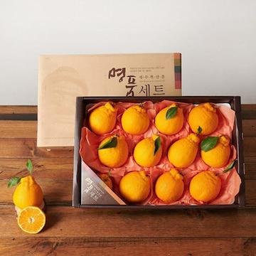 감동 제주 서귀포 한라봉 명품 10~12개(과) 5kg (1개)