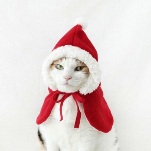 코코워크 Miyopet 크리스마스 산타옷 빨간 망토_이미지