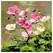 피포페인팅 DIY그림그리기 꽃정물화 Q1018_이미지
