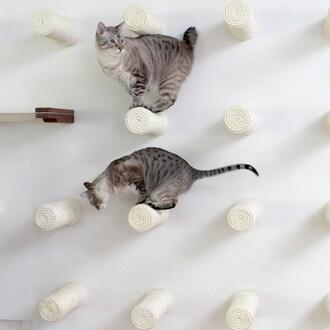 엘비스 DIY 고양이 공간활용 원목벽걸이 캣타워 벽 놀이터 (5개)_이미지