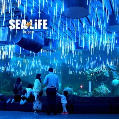 SEA LIFE 부산아쿠아리움 입장권 (소인)_이미지