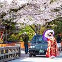 일본 벚꽃여행~<br /> 특가상품/1인출발OK