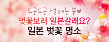 일본 벚꽃 인포그래픽