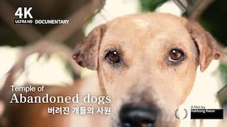 4K [다큐멘터리] 버림받은 개들의 사원, 태국 (한글자막)