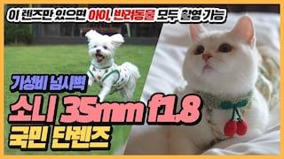 (4K)  [리뷰] 반려동물, 아기 촬영하기 좋은 소니 35mm f1.8 렌즈 리뷰 (강아지, 고양이)