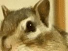 자는 자세도 귀여운 다람쥐